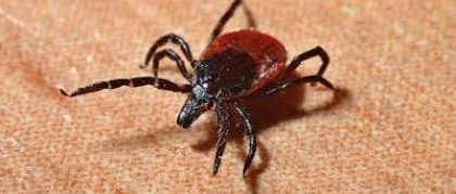 Lyme Disease – Just a Minor Bite or Major Epidemic?